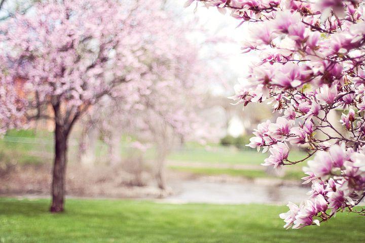 vine-vara-in-martie-temperaturi-anormale-in-toata-romania-1.jpg