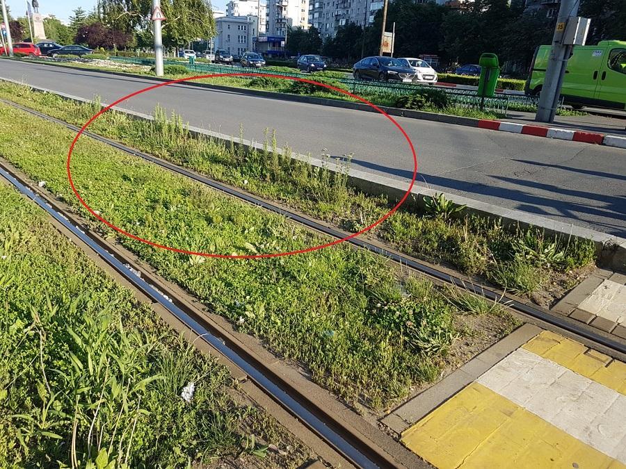 coada-soricelului-linia-tramvai_7ec11.jpg