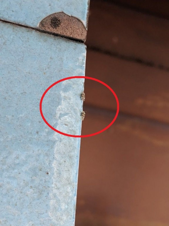 insecte_4fff7.jpg