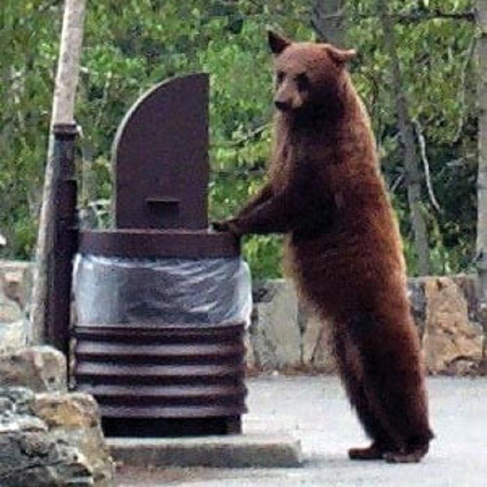 UPDATE---Brasov--un-urs-a-omorat-un-turist-strain_e62d9.jpg