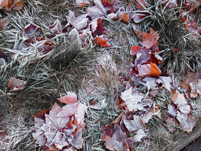 record-de-frig-la-87-de-statii-meteo-pentru-dimineata-de-27-septembrie-0_e1baa.jpg