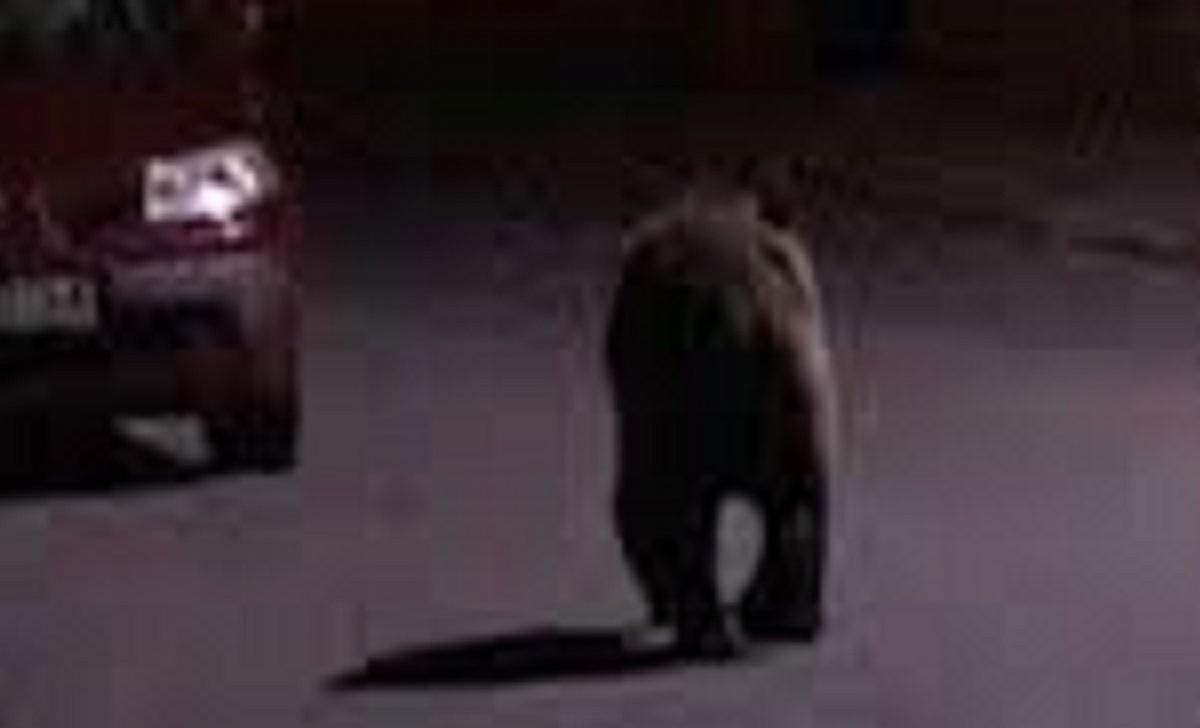 urs-strada-busteni-vineri-noapte_da461.jpg