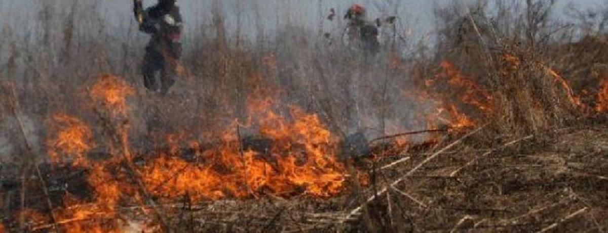 incendiu-vegetație-uscata_0e84e.jpg