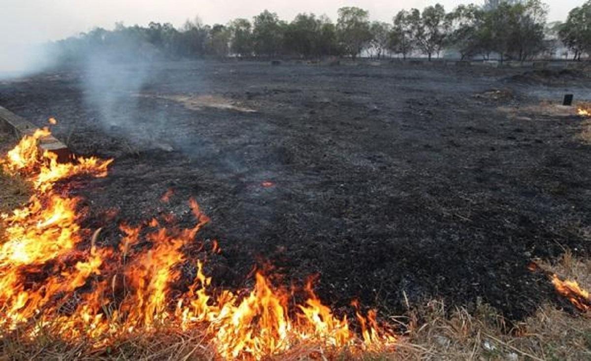 incendiu-vegetatie-uscata_7482b_e5aae_e692b.jpg