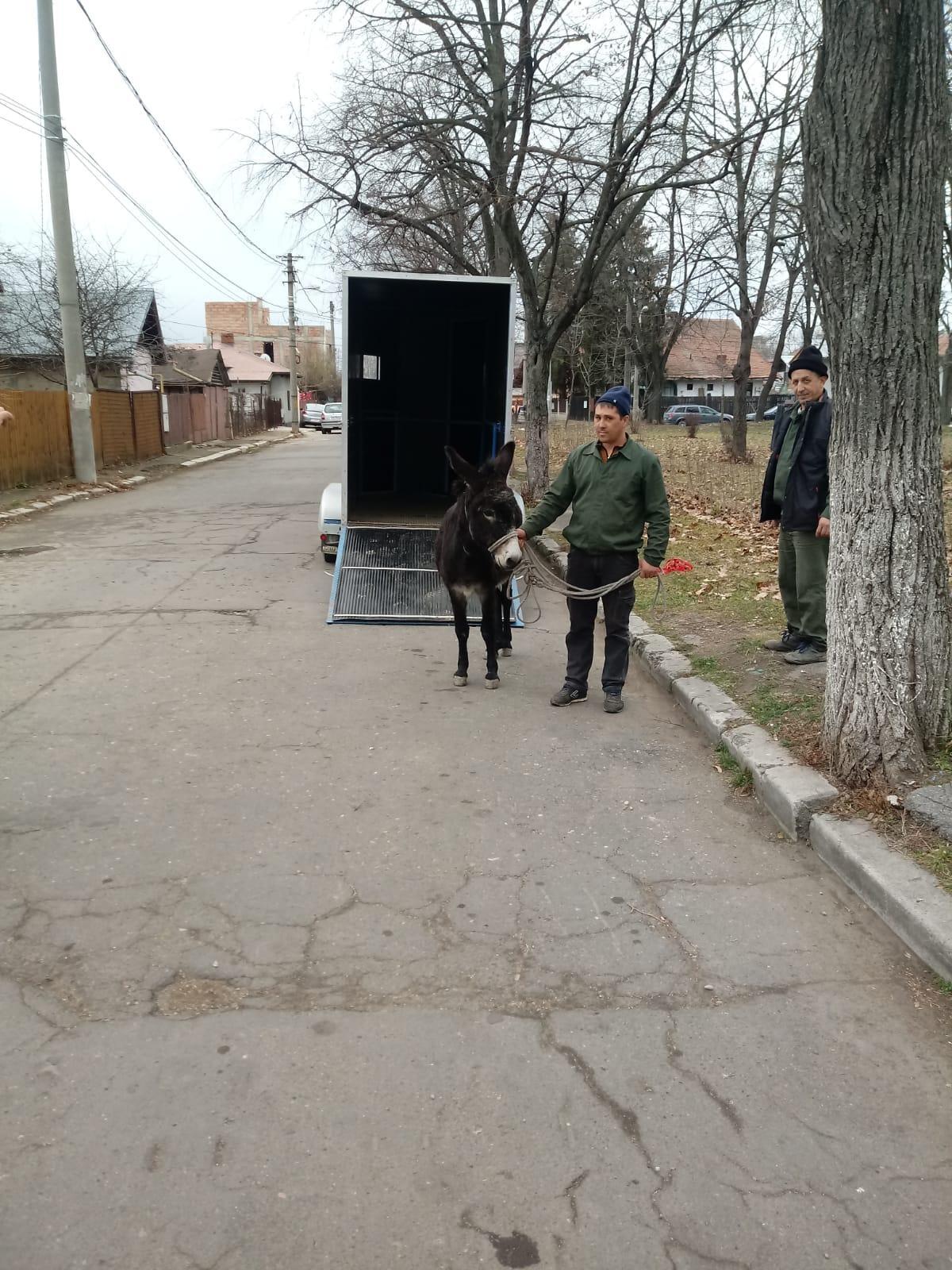 magar-parc-strada-eroilor-ploiesti_e8290.jpg
