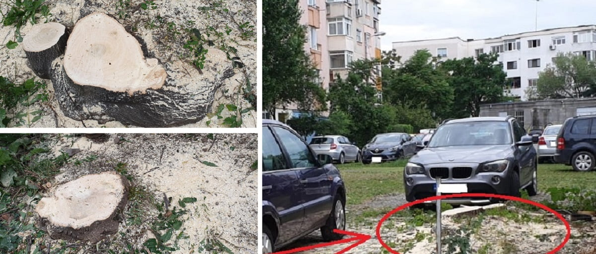 Ce spune SGU Ploiești despre tăierea copacilor într-o parcare din Ploiești