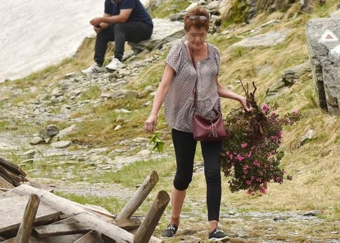 O turistă a dezrădăcinat și a luat acasă o tufă de bujor de munte. Reacția Salvamont ArgeșFOTO