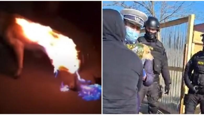 Cruzime: Câine stropit cu diluant și incendiat de doi tineri, de dragul amuzamentului-LINK VIDEO