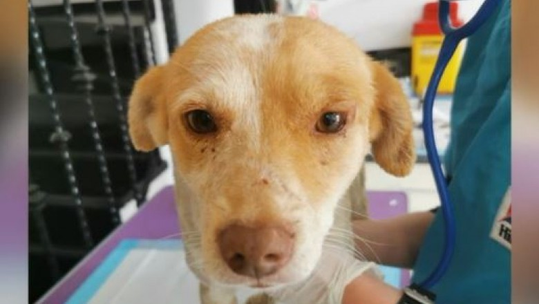 Câinele incendiat de doi copii din Buzău a fost salvat