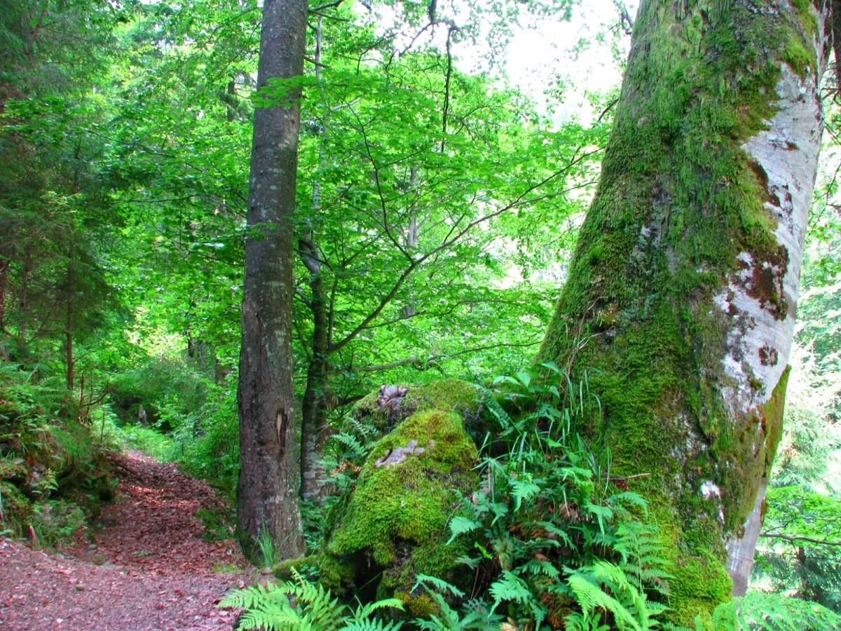 Catalogul pădurilor virgine și cvasivirgine din România a fost actualizat. Garda Forestieră Ploiești a identificat în Prahova și în Argeș o suprafață de 3.382 ha